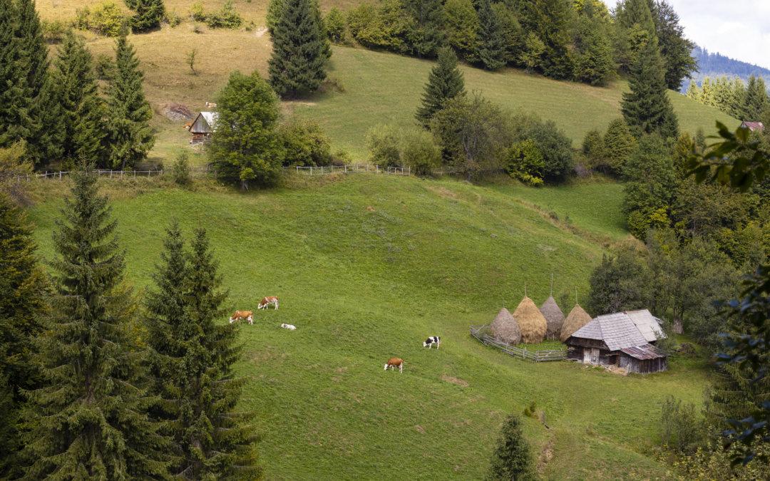 Interviurile România Remarcabilă: Cum să ajungi în natură într-un mod cu adevărat sigur